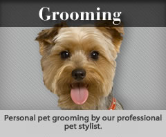 Personal pet grooming by our professional pet stylist